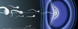 In-Vitro Fertilization (IVF) Success Rates : Measures to Increase & Affecting factors