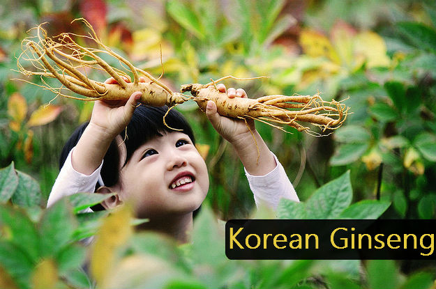 korean_ginseng_benefits