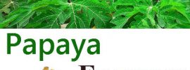 16 Major Papaya Enzyme Side Effects