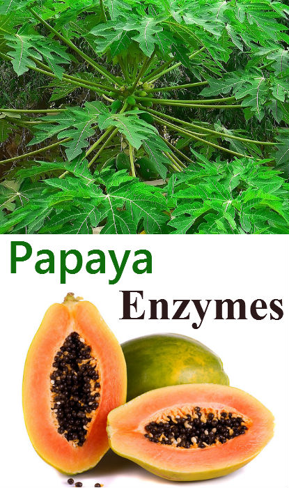 papaya_enzyme_side_effects