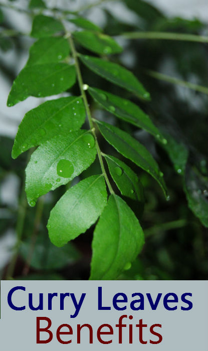 curry_leaves_benefits